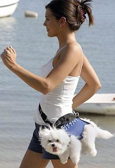 i would exercise everyday if i had this! perfect for maggie when she gets tired!