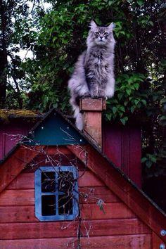 That's one helluva big cat!!