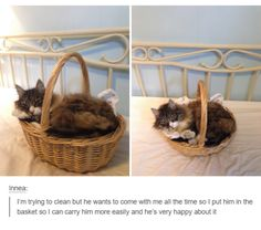 Cats: portable for their convenience