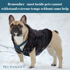 Remember to protect your indoor dog when going outside in extreme cold.   They are not equipped to handle the cold without a coat or jacket.  Pet Hangout has an amazing line of dog coats too: http://pethangout.com/dog-supplies/dog-apparel/dog-jackets   dog, dogs, dog jacket, dog coat, dog apparel, dogs with coats, dog life jacket, dog life vest, indoor dogs, how to keep a dog warm
