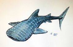 whaleshark watercolour painting illustration