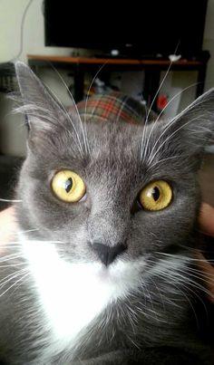 This is my friend's cat, Kezia ????
