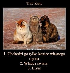 Happy Animals, Animals And Pets, Funny Animals, Avatar Ang, Polish Memes, Weekend Humor, Funny Mems, Wtf Funny, Best Memes