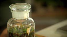 Fruit Tea, Korn, Herbal Tea, Kraut, Herbalism, Mason Jars, Healing, Recipes, Medicine