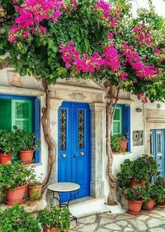 Tinos. I wish I was able to grow climbing bouganvillea... love the blue door in that pumpanum portal and all that plant pot #mediterranean