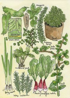 Herbs and greens (by paper kites)