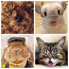 Tuesday Ten: Must-Follow Instagram Animals