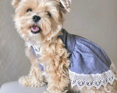 Chambray and Lace Dog Dress, Dog Clothes, Dog Dress, Dog Apparel, Organic Cotton, Organic Clothes, Eco Dog Clothes