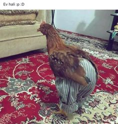 Funny Chicken Pictures, Funny Photos, Funny Happy, The Funny, Cute Baby Animals, Funny Animals, Laughing Pictures, Chicken Humor, Funny Arabic Quotes