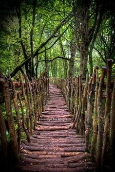 Puzzle Wood bridge, Coleford, Forest of Dean, Gloucestershire, England