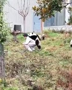 Cute Animal Videos, Funny Animal Pictures, Cute Little Animals, Cute Funny Animals, Nature Animals, Animals And Pets, Cute Puppies, Cute Dogs, Cute Panda