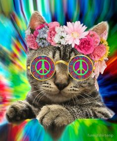 Hippie Cat Kitty Groovy Tie Dye T Shirt Peace Sign Festival Hippie Peace, Happy Hippie, Hippie Love, Hippie Chick, Hippie Vibes, Hippie Style, Peace Love Happiness, Peace And Love, Crazy Cat Lady