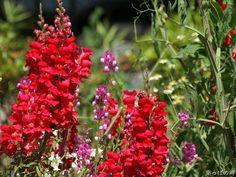 Beautiful Exotic Nature Flowers - Part 3 (12 images) - ImageBlogs.org | Wonderful Image Island |ImageBlogs.org | Wonderful Image Island
