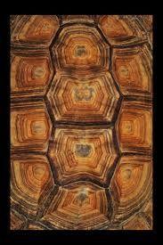 Tortoise Shell by ~digitaldreamz666 on deviantART