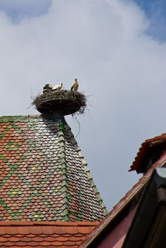 """""""Stork's Nest"""" by Bobrad on Flickr ~ Colmar, Alsace, France:  The villages in this area have successfully encouraged the return of the stork.  Several of the towns had one or more nest that can weigh up to 1,000 pounds."""