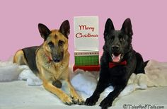 Waiting for Presents -- Tales and Tails
