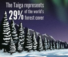 Frozen Fact: The Taiga represents 29 percent of the world's forest cover.