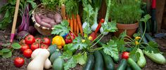 ON COMMON GROUND | When We Say Plant-Based, Here's What We Mean | Oldways
