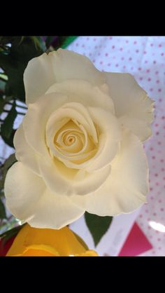 Gorgeous cream/white rose Cream White, White Roses, Girly, Flowers, Plants, Beautiful, Women's, Girly Girl, Plant