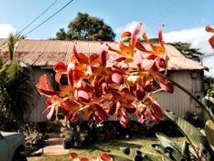 Orchids and a Tin Roof - Koloa, Kauai