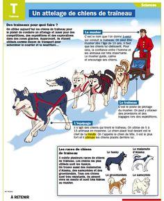 Fiche exposés : Un attelage de chiens de traîneau