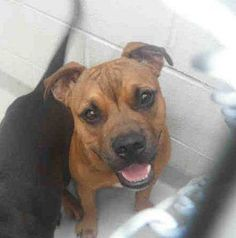 ****PENSACOLA, FLORIDA *******   $30 PLEDGED TO RESCUE!  Archie is a sweet 5 month old boxer boy (A249695) who somehow found himself in this high kill facility.  If you can provide Archie a forever or foster home please email adopt@saveasoutherndog.com ASAP!    YOU MUST EMAIL IF YOU ARE INTERESTED IN SAVING ARCHIE  https://www.facebook.com/photo.php?fbid=689647334384560=a.512742358741726.129398.488864017796227=1=nf
