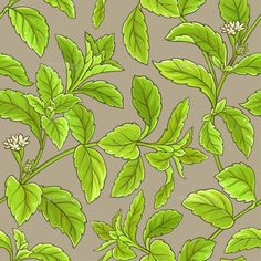 Buy Stevia Branch Vector Pattern by on GraphicRiver. stevia branch vector pattern on white background Feather Clip Art, Vector Design, Logo Design, Branch Vector, Vector Pattern, Stevia, Vintage Art, Plant Leaves, Logos