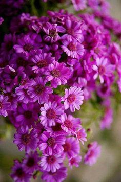 Beautiful purple flowers / - - Your Local 14 day Weather FREE > www. No Ads or Apps or Hidden Costs Exotic Flowers, Amazing Flowers, My Flower, Purple Flowers, Colorful Flowers, Beautiful Flowers, Purple Daisy, Autumn Flowers, Magenta