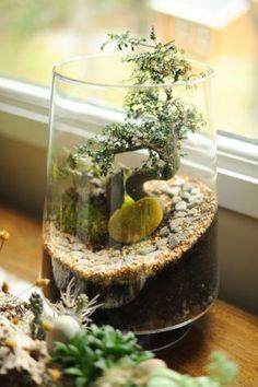 Bonsai type tree (shrub) in a terrarium. Terrarium Plants, Glass Terrarium, Succulent Terrarium, Dish Garden, Glass Garden, Water Garden, Ikebana, Diy Jardim, Plantas Bonsai