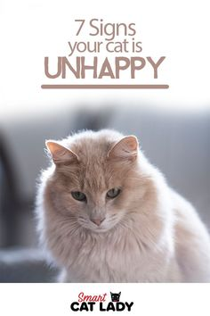Cat Care Tips Ever wonder how to tell if your cat is unhappy? Here are 7 signs your cat is unhappy for cat lovers to see. Check out these cat care tips on how to spot if your cat is truly a grumpy cat or just being a cat. Cat Care Tips, Pet Care, Pet Tips, Cat Crying, Chesire Cat, What Cat, Puppy Play, Cat Behavior, Cat Health