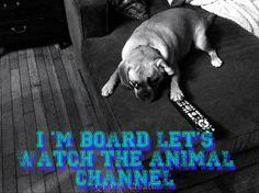 Dog Quotes Funny, Dogs, Animals, Animales, Animaux, Pet Dogs, Doggies, Animal, Animais