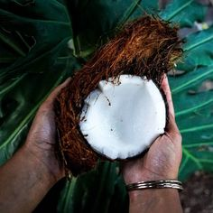 Coconuts are good for so many things! We use organic cold-pressed virgin coconut oil in our soaps and body butters. We also use coconut milk in our unscented Coconut Dream soap. Try out the Coconut goodness at hirunadesigns.com. . . . #love #instagood #coconut #coconutoil #nature #food #travel #fitness #nofilter #photography #vscocam #vsco #foodporn #healthy #crueltyfree #lifestyle #handmade #inspiration #happiness #weekend #awesome #foodie #shopping #nice #vacation #daily #adventure #vegan…