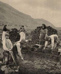 Irish men and women cutting peat turf