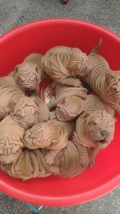 Would you buy this puppies? Dogs buy a puppy Super Cute Puppies, Cute Dogs And Puppies, Pet Dogs, Doggies, Cute Little Animals, Cute Funny Animals, Funny Dogs, Funny Animal Videos, Funny Animal Pictures