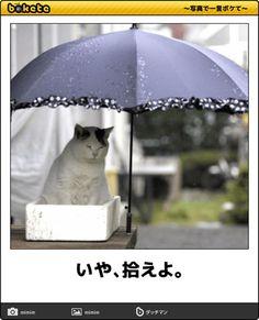 画像 Animals And Pets, Cute Animals, Neko, Funny Cats, Cool Stuff, Memes, Happy, Gatos, Cat Breeds