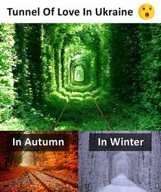 Travel Discover Tunnel of Love - Ukraine Amazing Places On Earth Beautiful Places To Visit Cool Places To Visit Wonderful Places Beautiful Things Vacation Places Vacation Spots Places To Travel Vacation Ideas Amazing Places On Earth, Beautiful Places To Travel, Wonderful Places, Cool Places To Visit, Beautiful Things, Vacation Places, Vacation Ideas, Vacation Travel, Vacation Spots