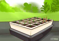 Grow Cherry Tomatoes Step 2.jpg