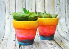 Use a variety of colors to make painted flower pots with rainbow ombre awesomeness! Both children and adults alike will love this easy craft. So fun! Painted Plant Pots, Painted Flower Pots, Painted Pebbles, Hanging Flowers, Diy Flowers, Potted Flowers, Paint Flowers, Flower Pot Design, Decorated Flower Pots
