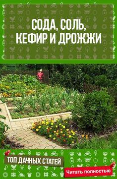 СОДА, СОЛЬ, КЕФИР И ДРОЖЖИ ПРИГОДЯТСЯ В ОГОРОДЕ!!! #сад #огород #дача #растения