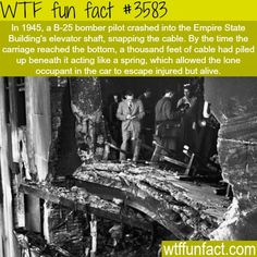 WTF Fun Facts is updated daily with interesting & funny random facts. We post about health, celebs/people, places, animals, history information and much more. New facts all day - every day! Wow Facts, Wtf Fun Facts, Funny Facts, Random Facts, Crazy Facts, Random Stuff, Wierd Facts, Strange Facts, Funny Stuff