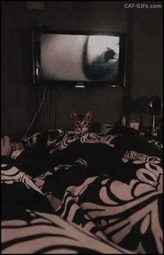 """Animated CAT • When your Kitten jumps on you like a tiger for prey. """"I believe I can fly""""."""