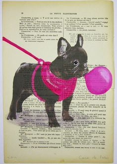 french bulldog & bubblegum.