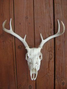 Deer Skull and Antlers-Rustic Decor-Woodland Decor-Man Cave