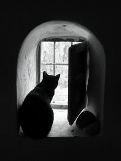 foto-gatto-nero-16.jpg (600×800)