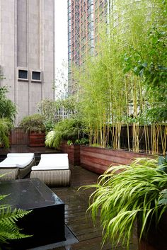 NYC Backyard + Rooftop Garden Designer for the beautifully wild — Alexandra Abuza - Yersq Sites Rooftop Terrace Design, Rooftop Patio, Terrace Garden, Garden Pots, Townhouse Garden, Magic Garden, Olive Garden, Small Garden Design, Urban Garden Design