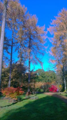 Westonbirt Fall Winter, Autumn, Golf Courses, Beautiful Places, England, Travel, White Trees, Viajes, Fall Season