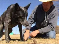 The Amazing Skidboot (Texas Country Reporter) - heartfelt video about the friendship between a cowboy and a dog