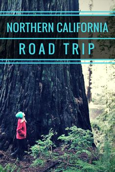 The Ultimate Northern California Coast Road Trip Itinerary. Best stops along the coast, things to do, lodging and campground information and driving distances! California Coast, California Travel, Northern California, Family Road Trips, Road Trip Usa, Humboldt Redwoods State Park, Southern Oregon Coast, Best Places To Camp, Travel Usa