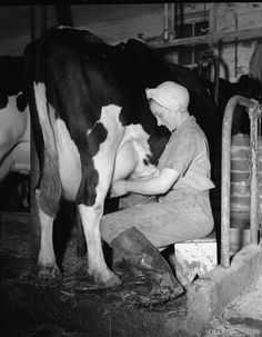 Milking the cows every morning...............................Google Image Result for http://1.bp.blogspot.com/-8rGu_hPuN6o/T7RxQ9I1haI/AAAAAAAAIUM/5rOtr7IJjEY/s1600/milking%2Bcow.jpg