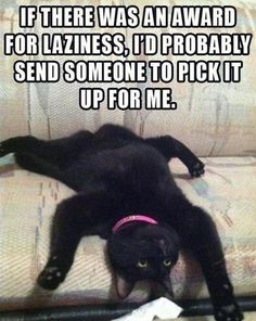 Love this cat!!   Funny